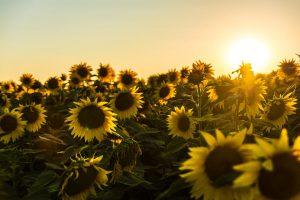 WennisRaachermannl(weiter) nabelt: Die besten Düfte für sommerliches Räuchern